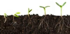 Seeds-FINAL